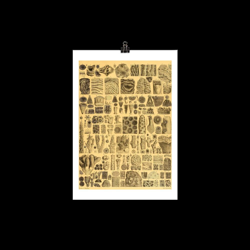 laminas-botanicas-para-cuadros-3