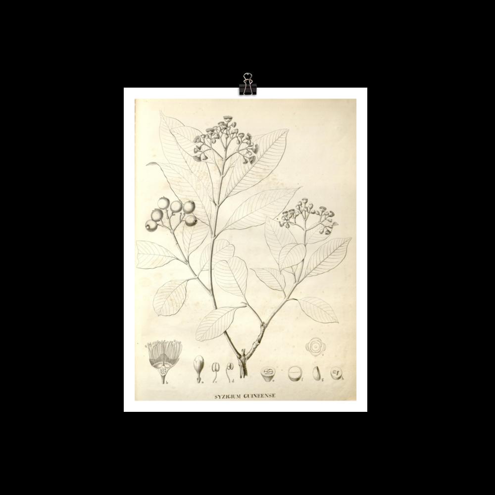 laminas-botanicas-para-cuadros-9