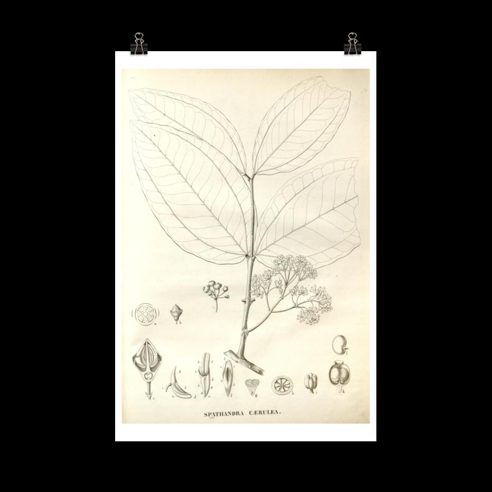 laminas-plantas-para-cuadros-1