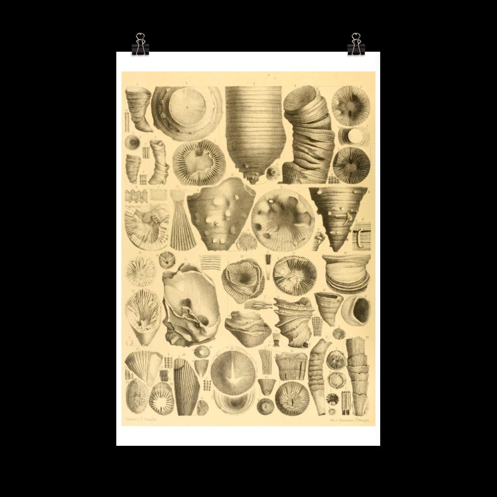 laminas-botanicas-para-cuadros-4