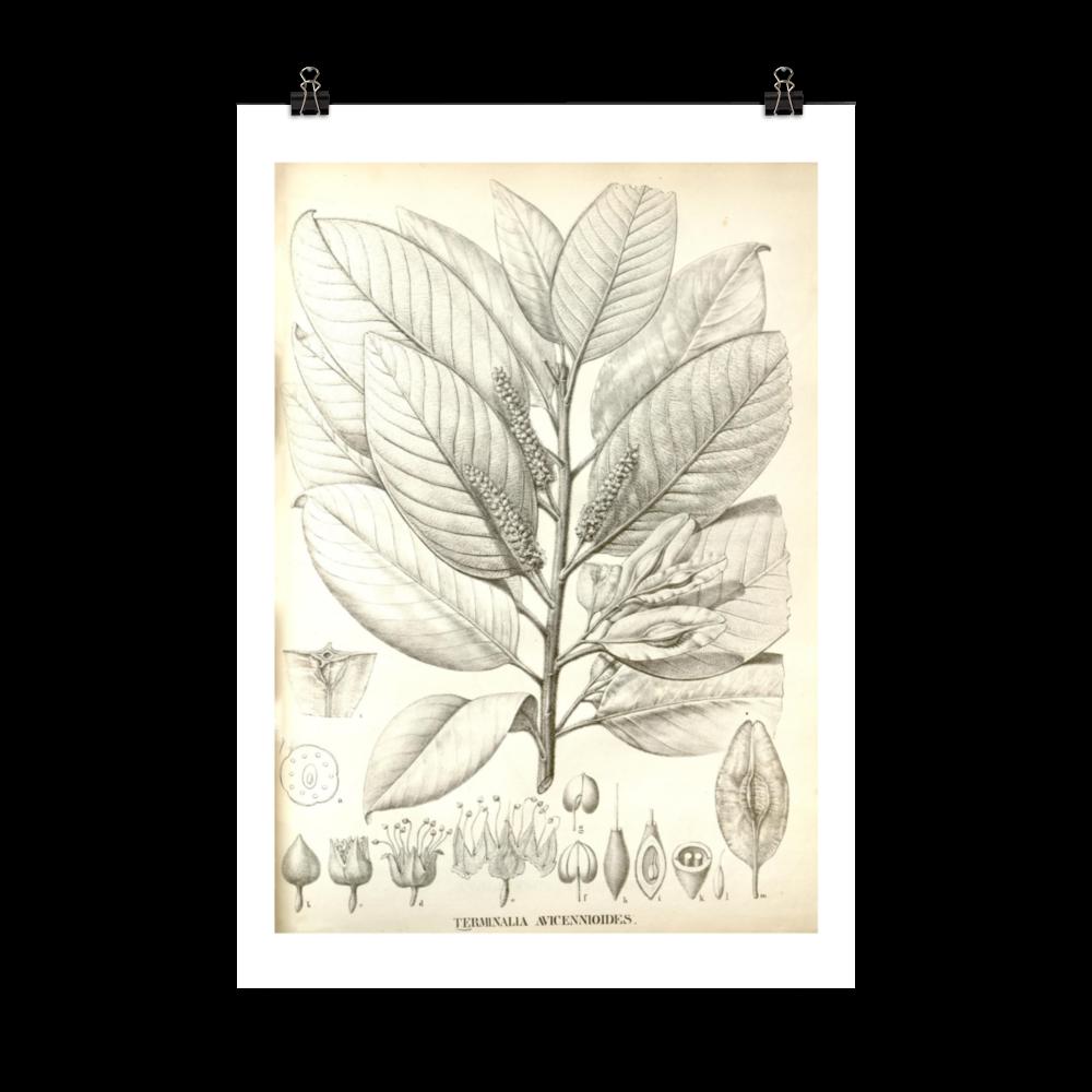 laminas-plantas-para-cuadros-2