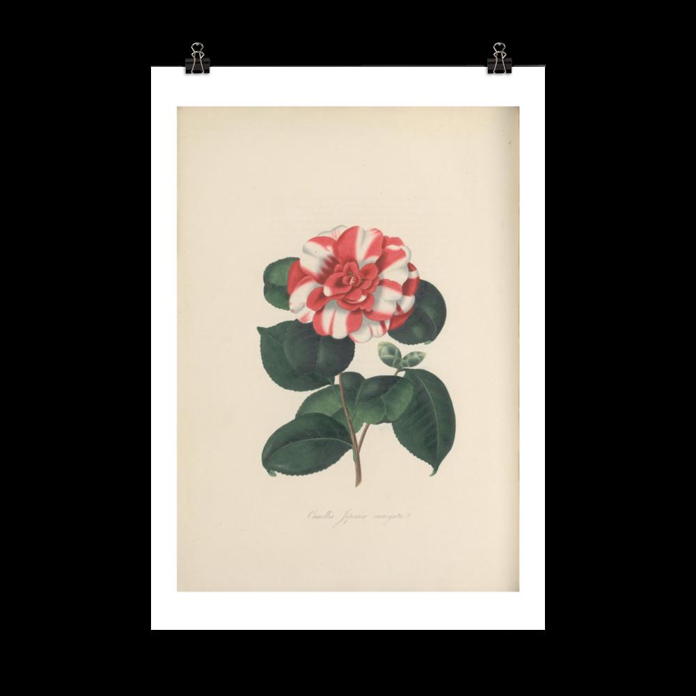 laminas-botanicas-para-cuadros-8