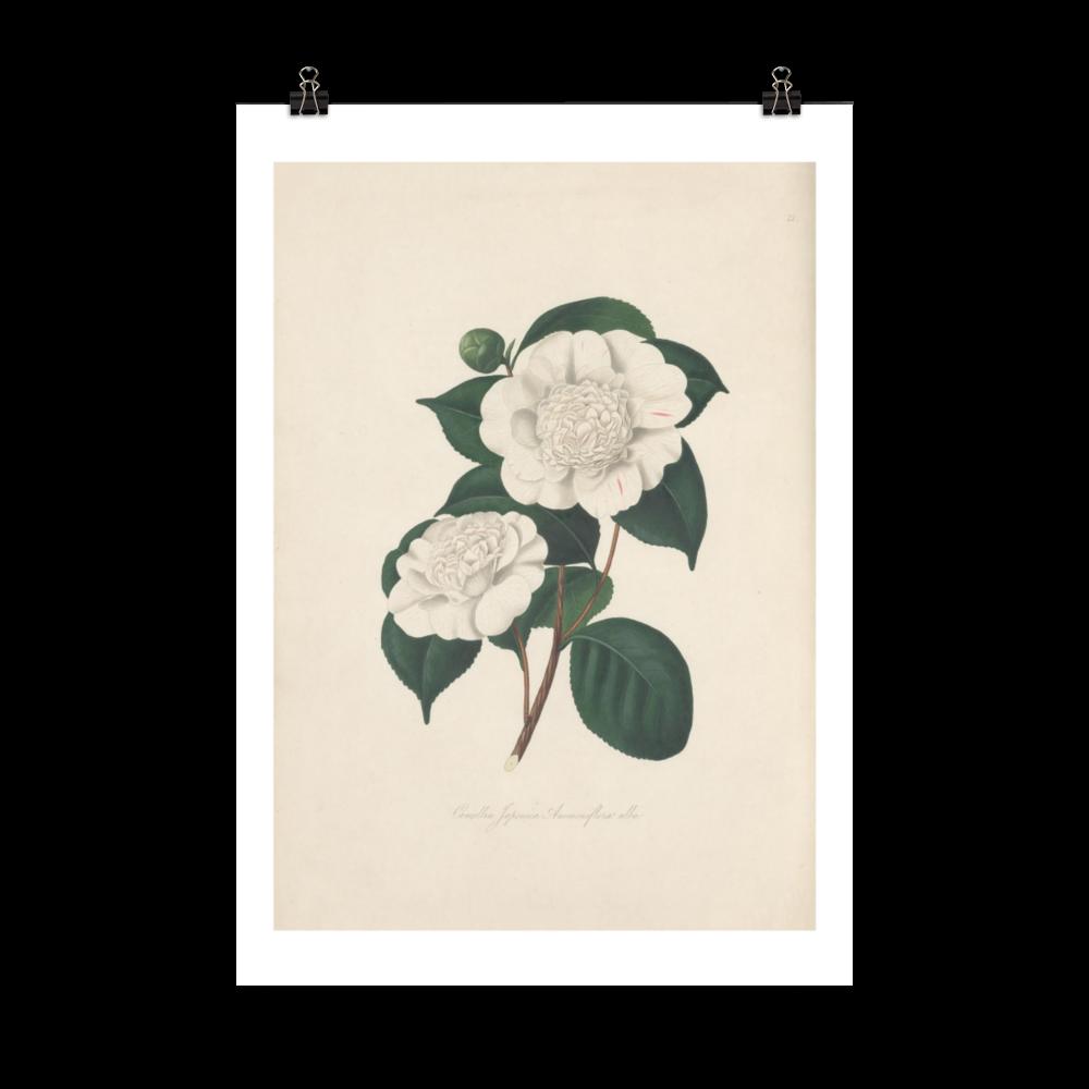 laminas-botanicas-para-cuadros-7