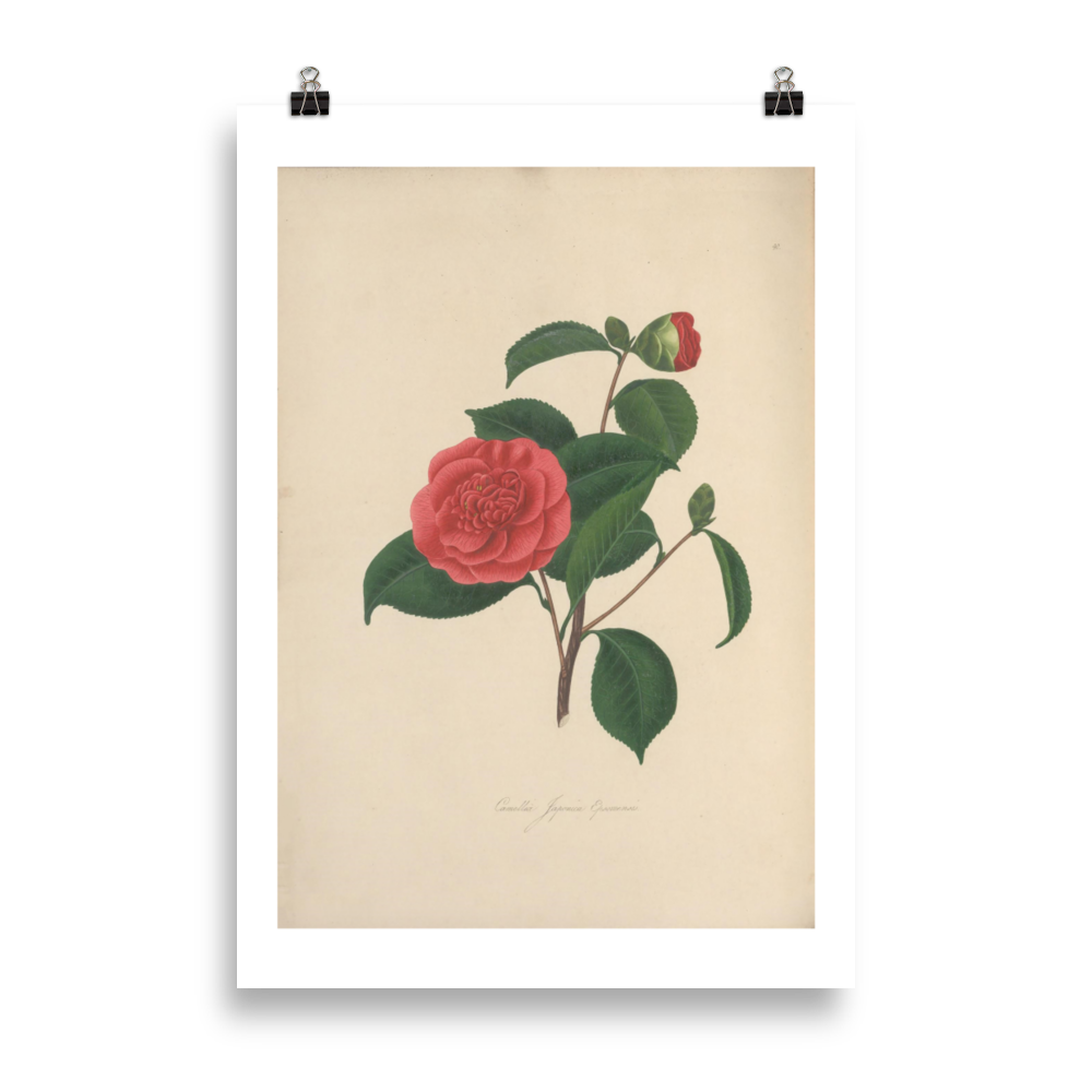 laminas-botanicas-para-cuadros-6