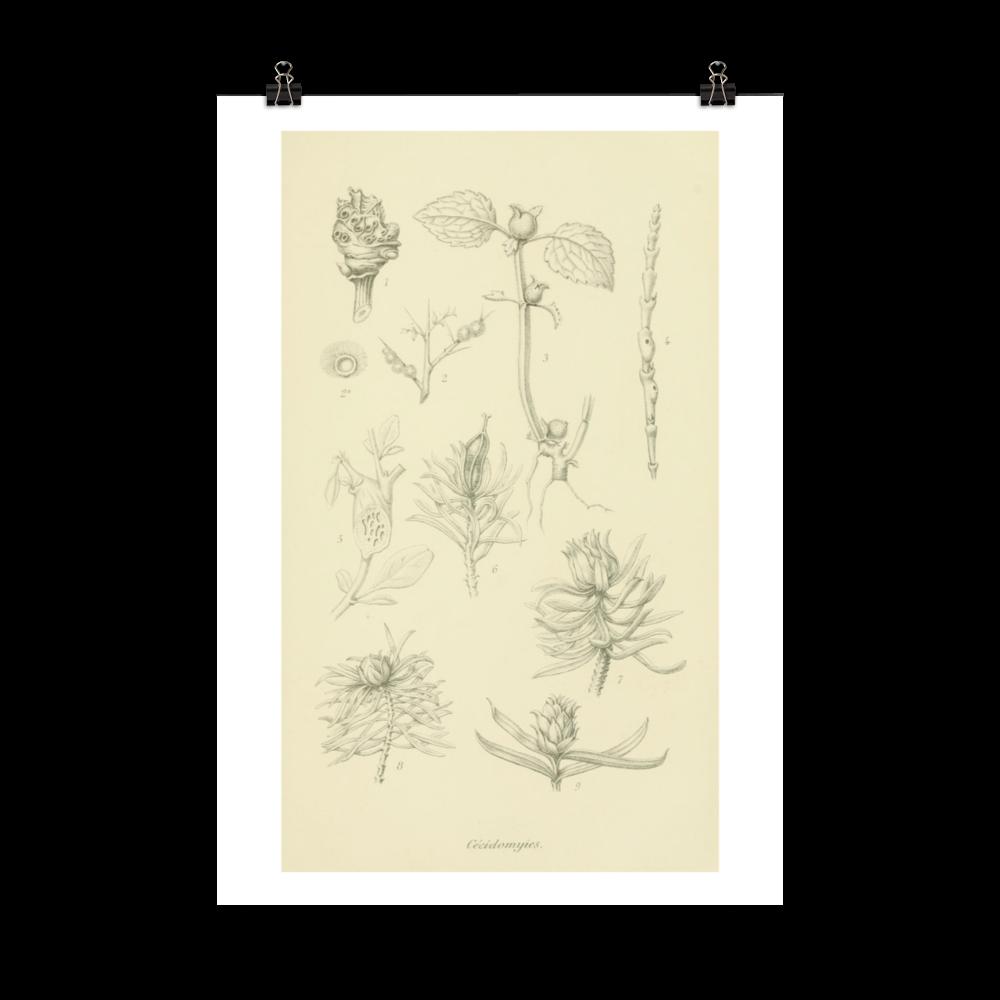 laminas-botanicas-para-cuadros-5