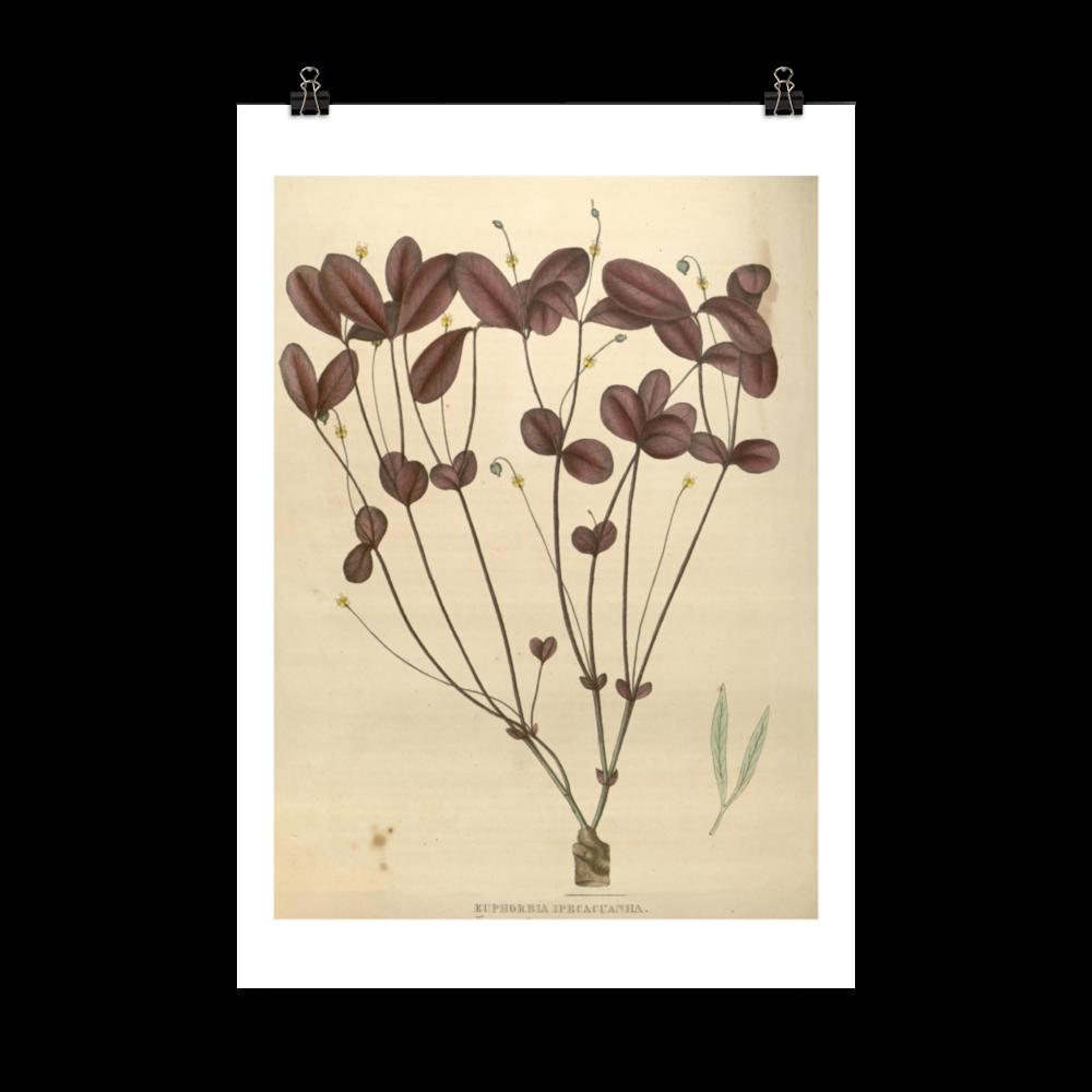 laminas-botanicas-para-cuadros-1