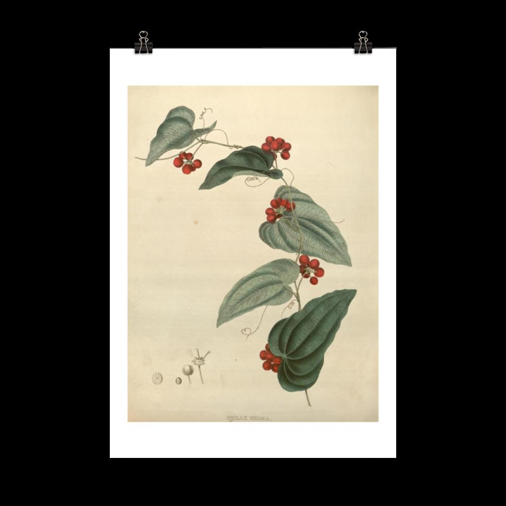laminas-para-cuadros-botanicas-2