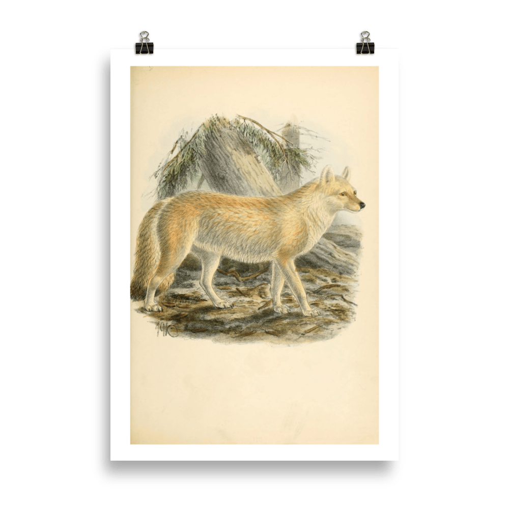Láminas-animales-lobo