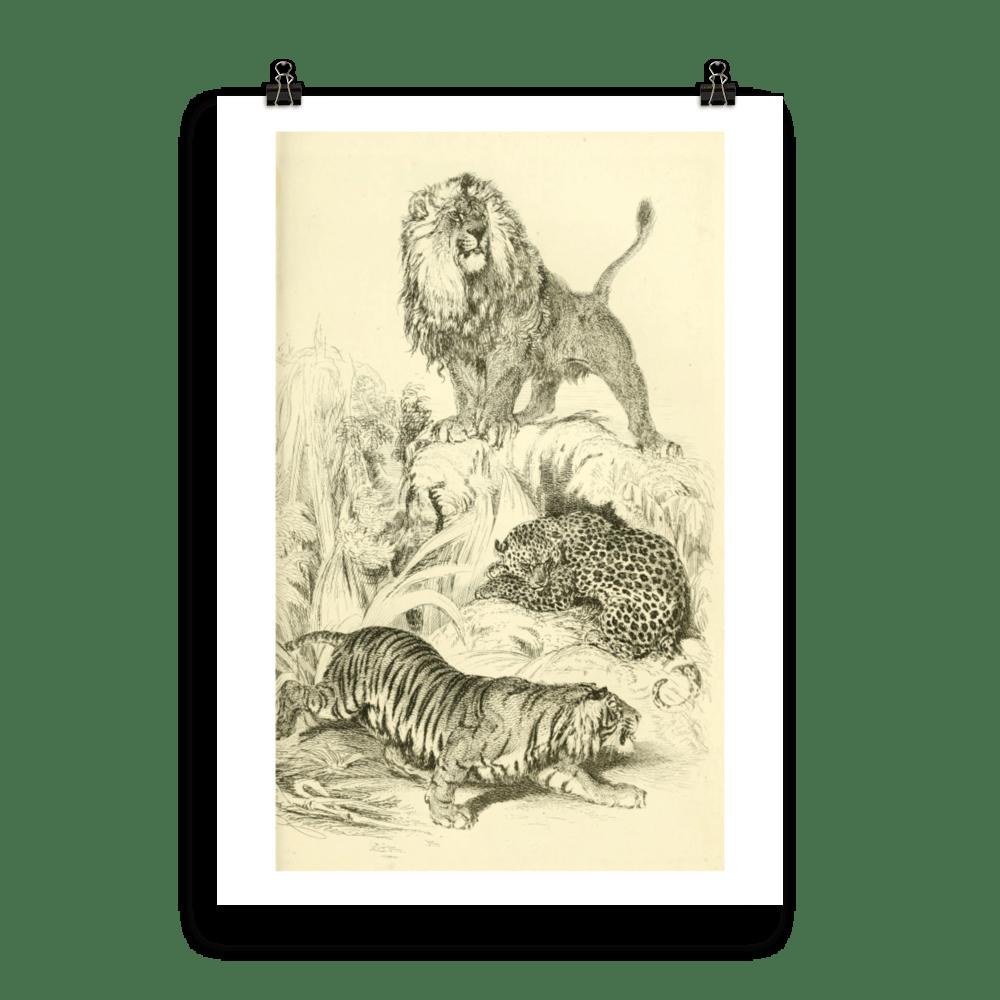 laminas-animales-cuadros-felinos