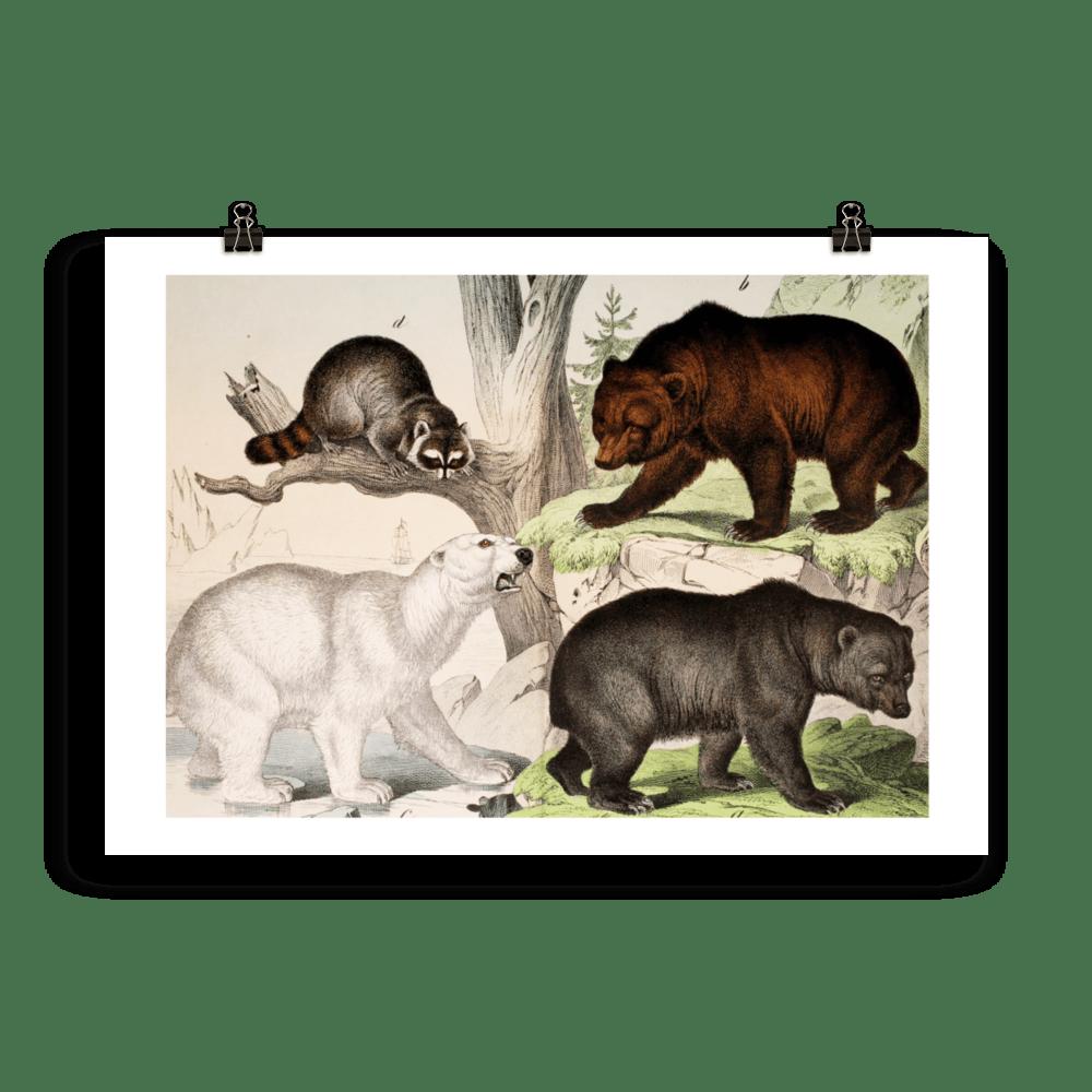laminas-animales-cuadros-osos