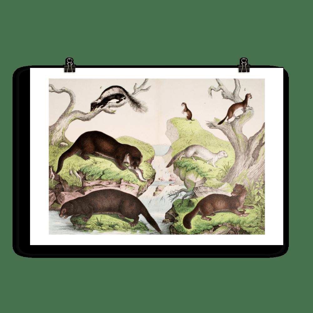 laminas-animales-cuadros-14