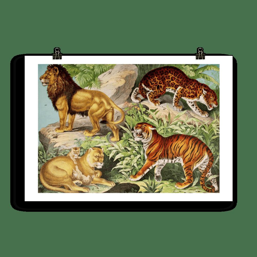 laminas-animales-felinos-cuadros-1