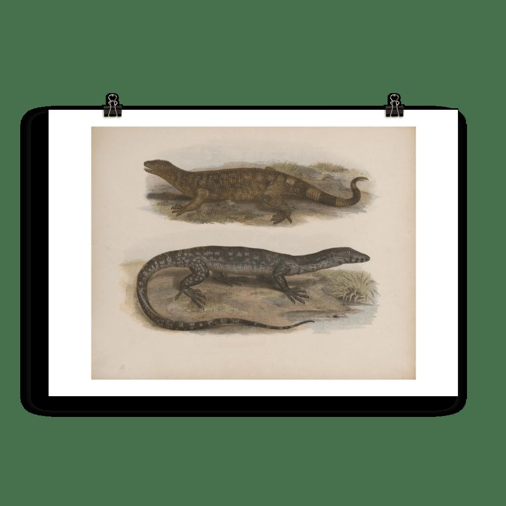 laminas-reptiles-cuadros-8