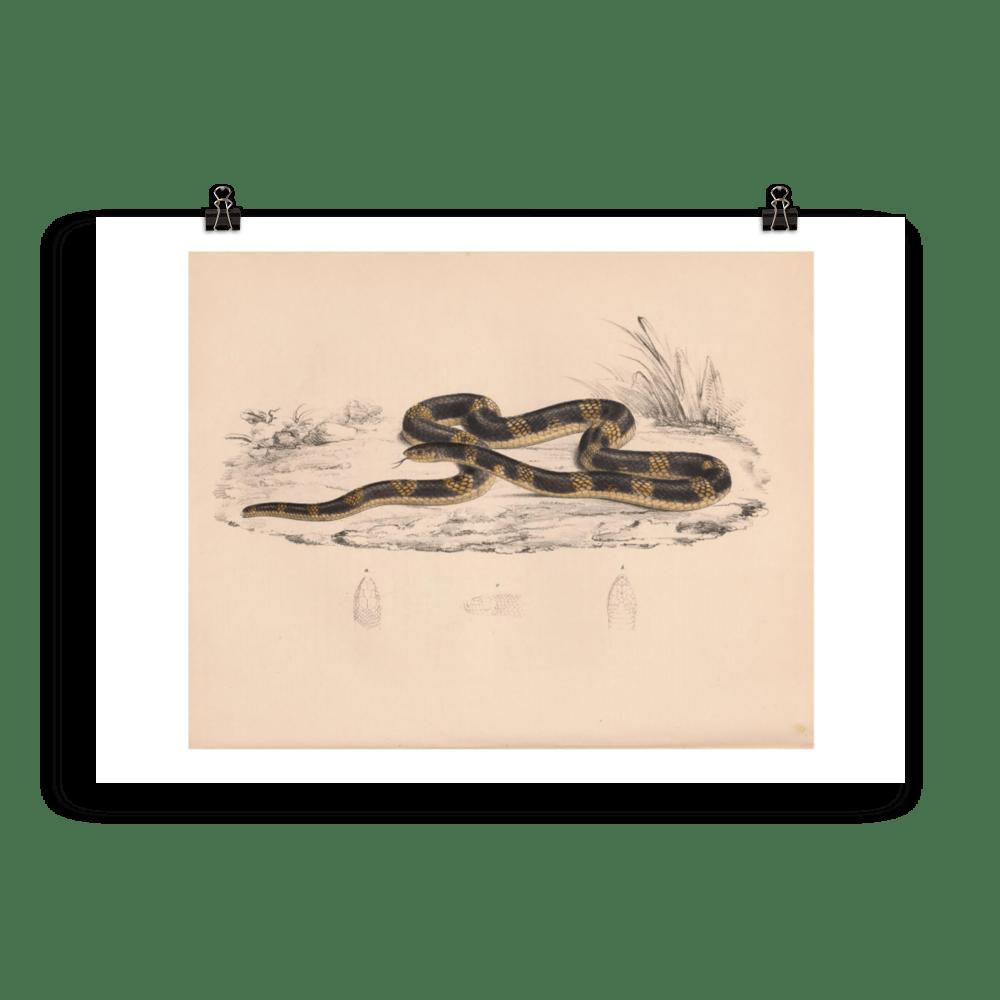 laminas-reptiles-cuadros-serpientes-2