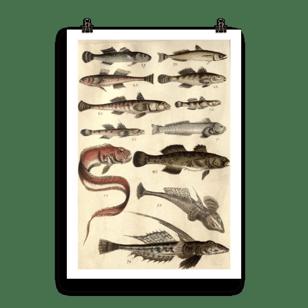 laminas-para-cuadros-peces-13