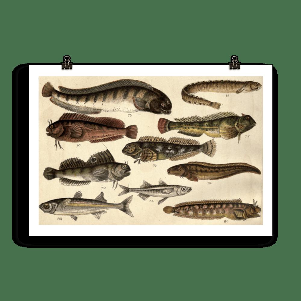 laminas-para-cuadros-peces-12