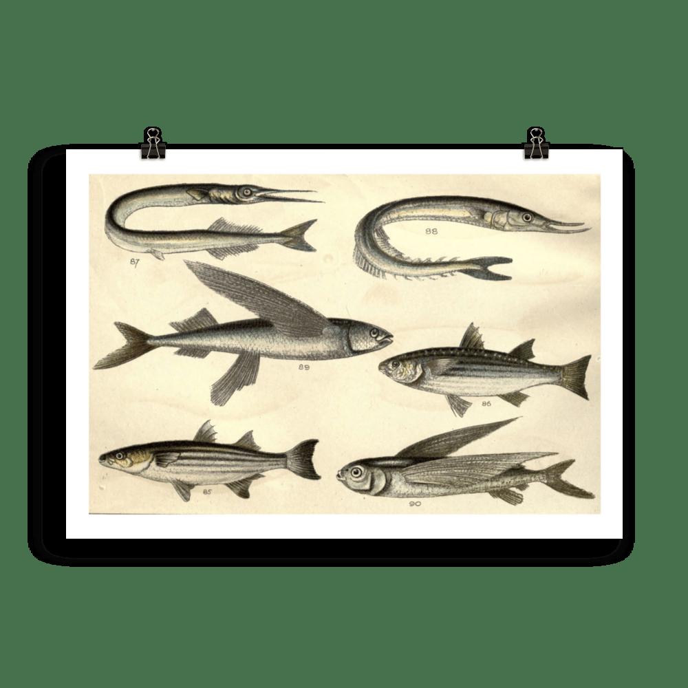 laminas-para-cuadros-peces-11