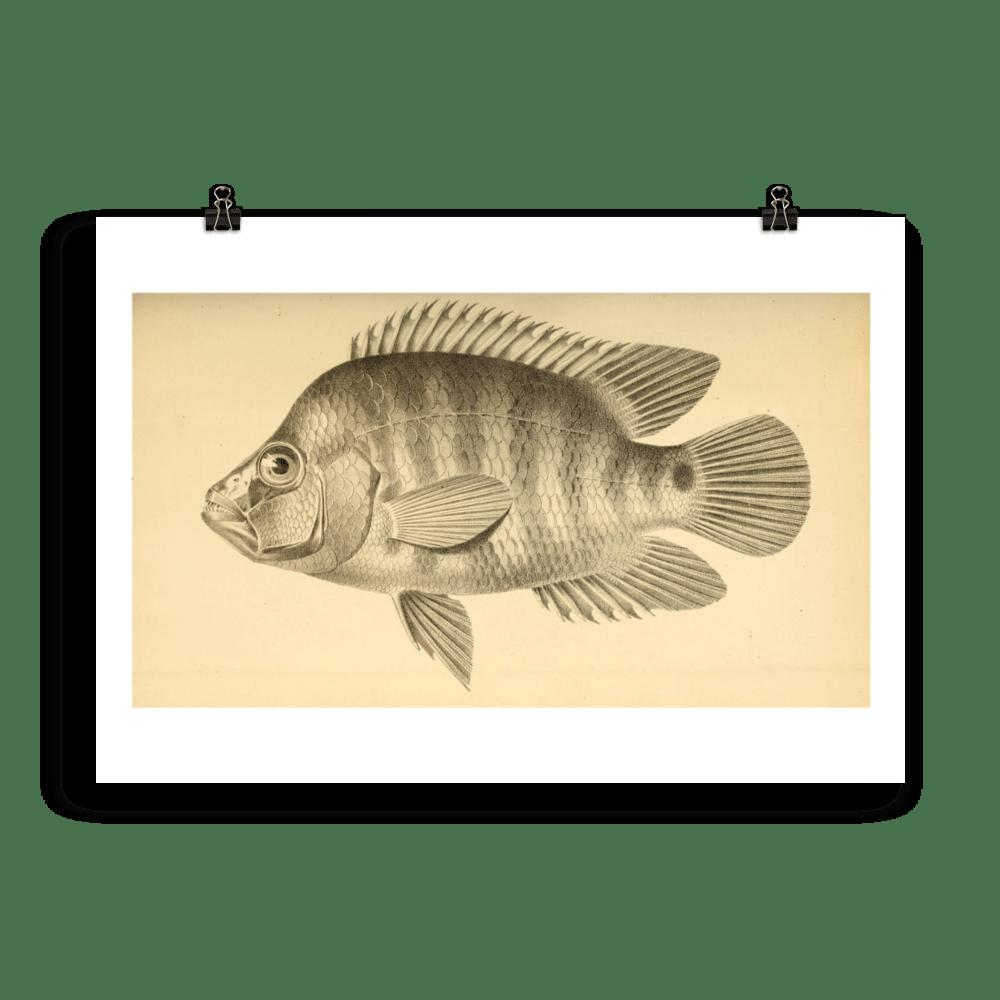 laminas-para-cuadros-peces-10