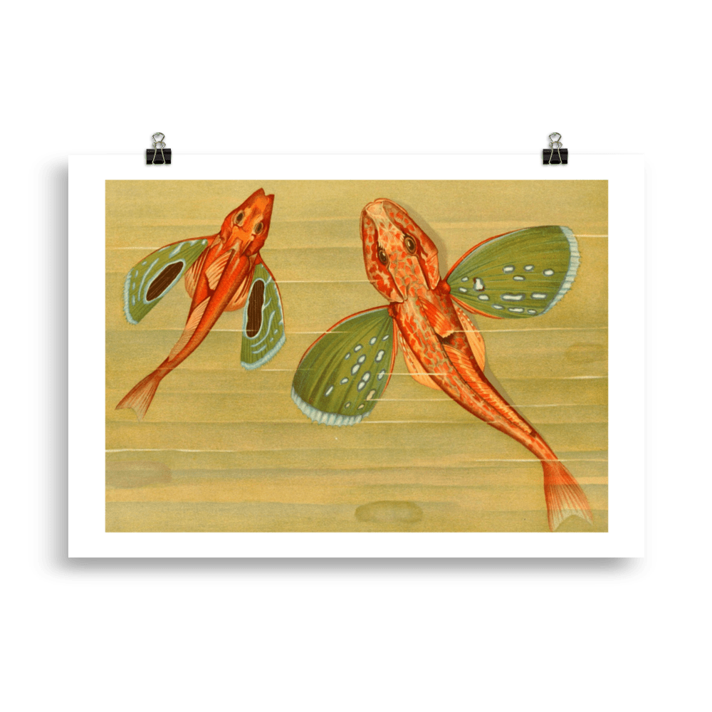 laminas-para-cuadros-peces-9