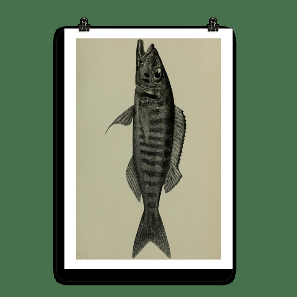 laminas-peces-para-enmarcar-seis