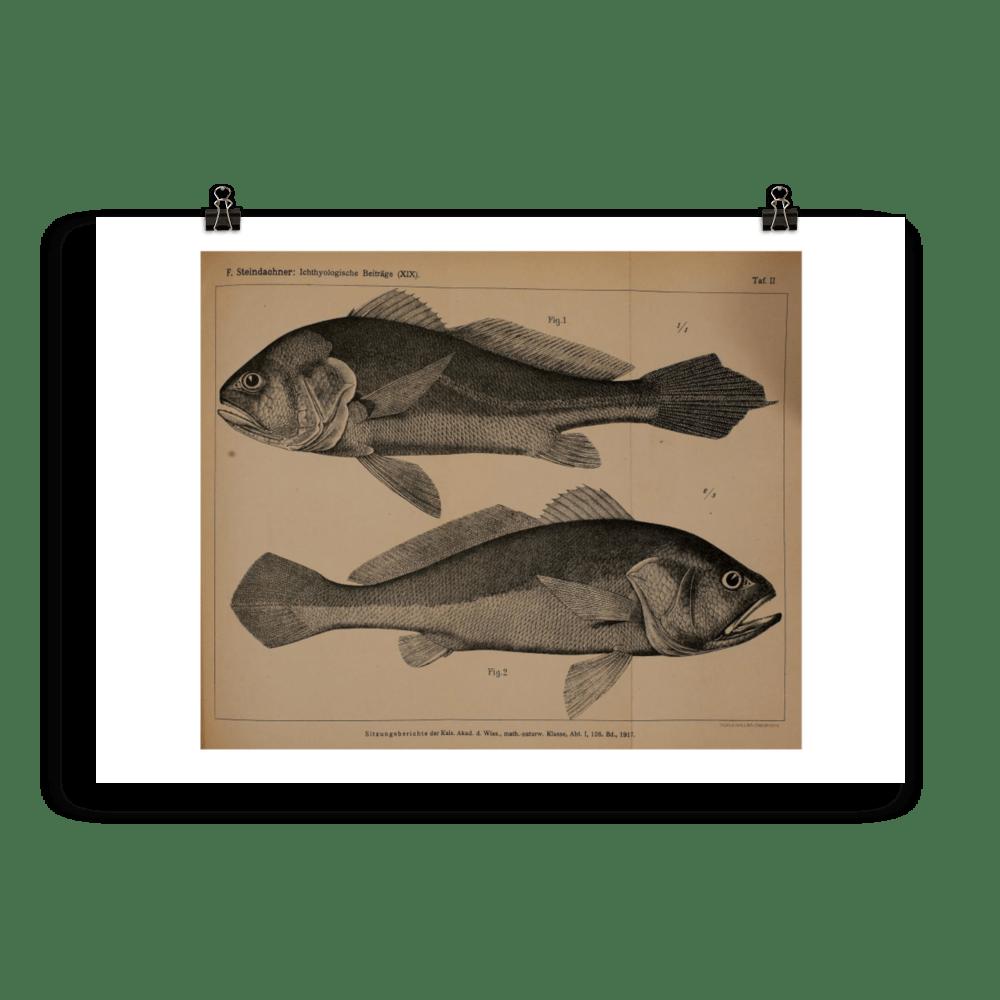 laminas-peces-para-enmarcar-4