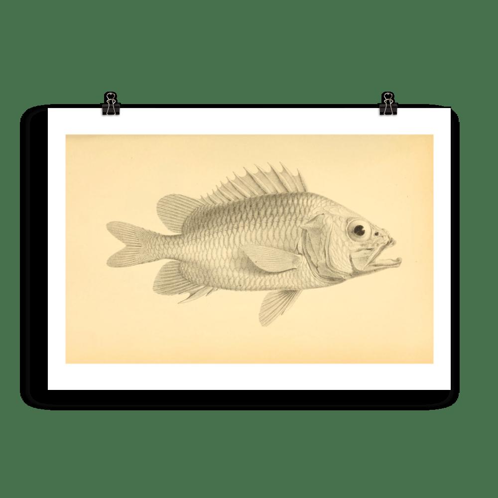 laminas-peces-para-enmarcar-1